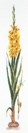 Thea Gouverneur GOK3072 Yellow Gladiolus
