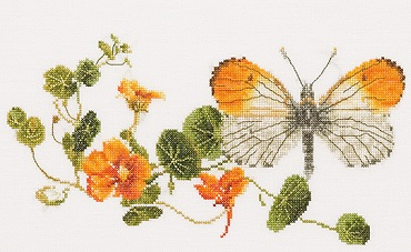 Thea Gouverneur GOK437 Orange tip butterfly
