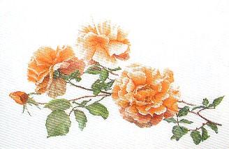 Thea Gouverneur GOK414 Orange rose