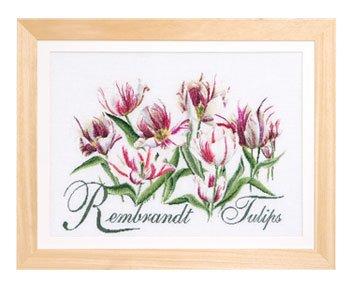 Thea Gouverneur GOK447 Rembrandt Tulips