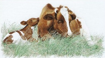 Thea Gouverneur GOK449 Red cow