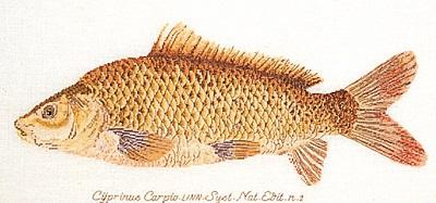 Thea Gouverneur GOK2045 Fish
