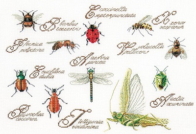 Thea Gouverneur GOK3029 Insects