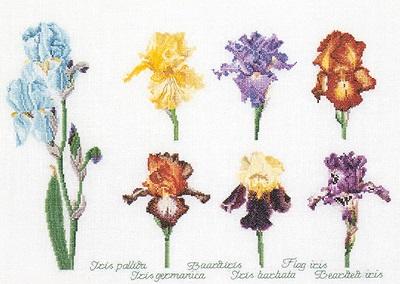 Thea Gouverneur GOK3051 Iris assortment