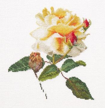 Thea Gouverneur GOK416 Rose release