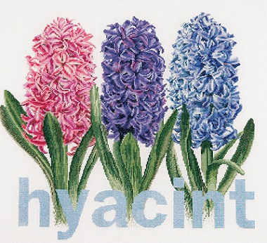 Thea Gouverneur GOK434 Hyacynth