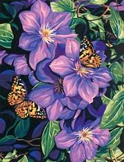 Clematis & Butterflies-91403