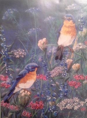 Dimensions 1429 Bluebirds