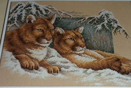 Sunset 13655 Snowy cougars