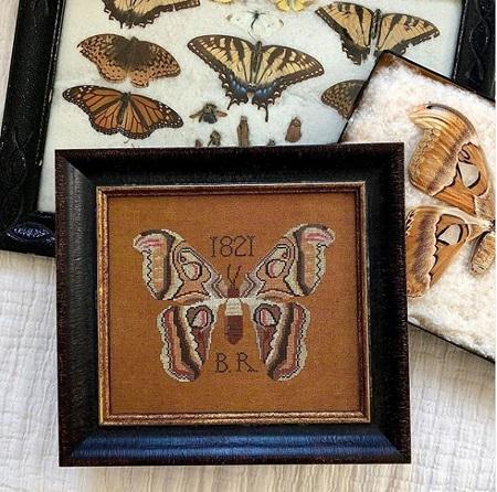 Kathy Barrick B.R.'s Moth