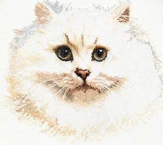 Thea Gouverneur GOK1045 White Persian Cat