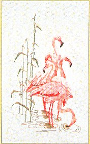 Thea Gouverneur GOK1070 Feeding flamingos