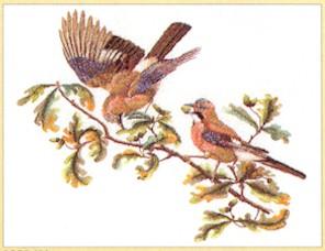 Thea Gouverneur GOK2022 Birds in branch