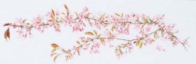 Thea Gouverneur GOK481 Sakura