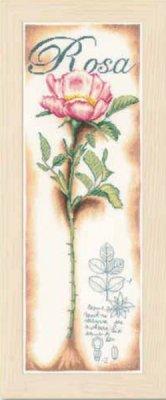 Lanarte PN154334 Pink Rose