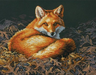 Dimensions 35318 Sunlit fox